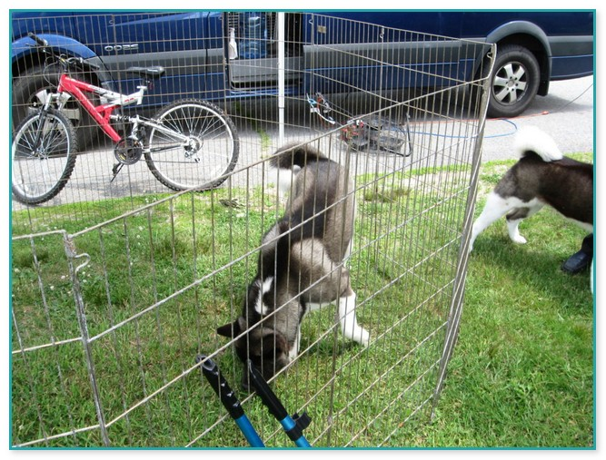 Above Ground Electric Dog Fence, Above Ground Wireless Fence For Dogs